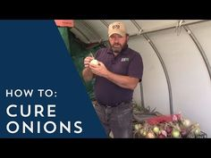 (4) How to Cure Onions - YouTube Harvest Onions, Utah State University, Gardening Tips, The Cure, Challenges, Learning, Youtube, Earth, Google Search