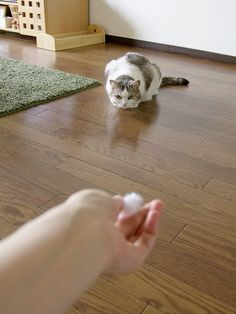 里親さんブログ反射神経がイマイチな猫 - http://iyaiya.jp/cat/archives/79429