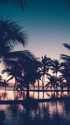Reminiscing Summer With 26 Sunny iPhone Xs Wallpapers Paradise Wallpaper, Beach Wallpaper, Cool Wallpaper, Tree Wallpaper Iphone, Wallpaper Backgrounds, Wallpaper Quotes, Beach Sunset Images, Palm Tree Background, Cute Wallpapers