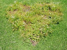 Heart Garden at Heide from this great pot http://jessicastanley.com.au/2012/01/21/the-heart-garden/