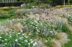 Meadow Flowers at Kew Gardens