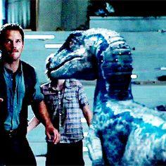 owen grady jurassic world - Bing Imágenes Blue Jurassic World, Jurassic World Dinosaurs, Jurassic World Fallen Kingdom, Jurassic Movies, Jurassic Park Film, Dino Park, Indominus Rex, Beast Creature, The Lost World