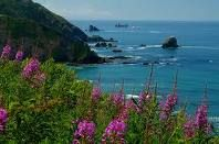 Pacific Coast of Redwood National Forest