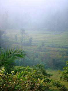 Kangra Valley, Himachal Pradesh, India