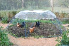 LOVE this!!! Great way to rotate crops and get the chooks to safely turn over JUST their allocated bed