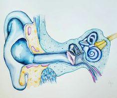 Image may contain: drawing Ear Anatomy, Human Anatomy Art, Anatomy Drawing, Medical Drawings, Medical Art, Human Figure Drawing, Figure Drawing Reference, Anatomy Reference, Medical Illustration