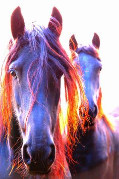 Purple horses for Sagittarius - http://simplysunsigns.com