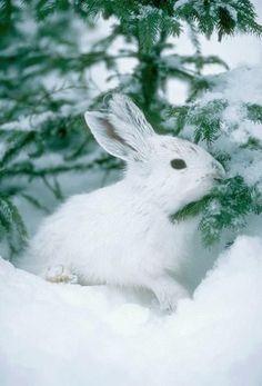 winter in green Beautiful Creatures, Animals Beautiful, Cute Animals, Snow Bunnies, Winter Magic, Winter's Tale, Mundo Animal, Winter Beauty, Cute Bunny