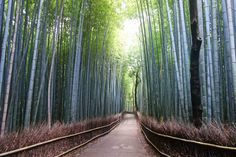 To Paradise... by Gorn Dhedchart, via 500px  Taken near Kyoto