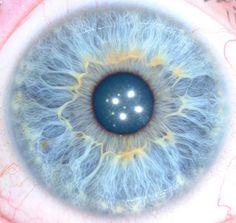 iridologie yeux marron - Recherche Google