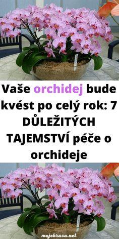 Easter Flower Arrangements, Easter Flowers, Gerbera, Flora, Holi, Garden, Plants, Balcony, Garten