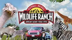 Natural bridge wildlife ranch, african safari, texas style