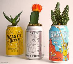 DIY cactus planters using cans Love Upcycling? Then this cactus plant pot DIY using empty drink cans is for you. Check it out now and give your cans a new lease of life!