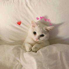 I think I am going to delete some posts. Cute Cats And Kittens, I Love Cats, Cool Cats, Kittens Cutest, Beautiful Kittens, Cute Cat Memes, Cute Love Memes, Cute Baby Animals, Funny Animals