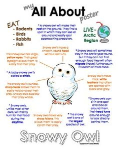 """This """"All About"""" book will be a fun addition to your classroom and lessons on snowy owls. This packet can be used along with books specific to the animals or it can be used on its own. Included in this unit is a full-color poster with a colorful graphic of the animal and information on the animal such as; where the animal lives (green), what the animal eats (brown), interesting facts about the animal (blue) and what the animal looks like (orange)."""