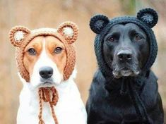 Super Ideas For Dogs Labrador Bffs Cute Puppies, Cute Dogs, Dogs And Puppies, Doggies, Bear Dogs, Animals And Pets, Funny Animals, Cute Animals, All Dogs