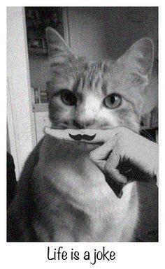 Life is a joke - cats