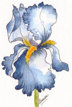 Blue iris watercolor and ink painting by Louise Christian Watercolor Pictures, Watercolor And Ink, Watercolor Flowers, Watercolor Paintings, Drawing Flowers, Paintings I Love, Indian Paintings, Watercolor Portraits, Watercolor Landscape
