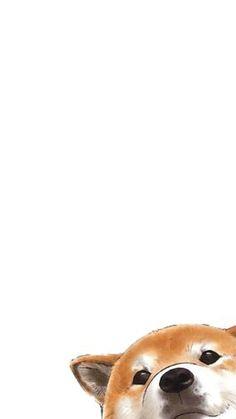 Cute dog phone wallpapers · shiba inu shiba inu, most beautiful Dog Wallpaper Iphone, Cute Dog Wallpaper, Tier Wallpaper, Drawing Wallpaper, Trendy Wallpaper, Kawaii Wallpaper, Animal Wallpaper, Apple Wallpaper, Screen Wallpaper