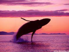 <3 whale