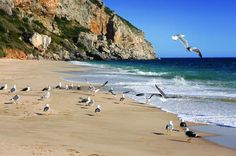 Sesimbra and Arrábida Natural Park Full Day Private Tour from Lisbon You are visiting Lisbon, but want to spend a different day, out of the bustle of the big city? The Arrábida Park and Sesimbra are your destinations. We offer you unlimited mobility without any complications and with a private driver to one of the most beautiful Portuguese landscapes with sumptuous green hills, a view to the blue ocean and the warmness of the people that invite you to have a relaxing day.We st...