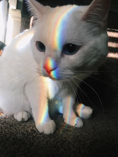 the most beautiful colors that come together on cat - your daily dose of funny cats - cute kittens - pet memes - pets in clothes - kitty breeds - sweet animal pictures - perfect photos for cat moms Cute Kittens, Cats And Kittens, Kittens Meowing, Siamese Cats, Cute Baby Animals, Funny Animals, Cat Aesthetic, Cat Photography, Funny Animal Pictures