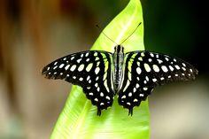 Butterfly - Butterfly garden