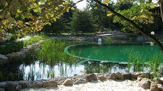 Natural Swimming Pool WIth Aquarium Filtration - Okeanos ...
