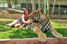 Thailand, tiger kingdom, Phuket