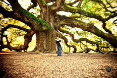 Wedding proposal picture at Angel oak tree.