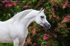 любимые фотографии - Люся - конники - equestrian.ru