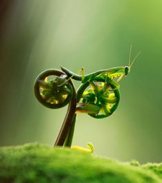 Ride bikes.... Even Nature does it!!