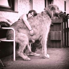 Οι παρακάτω σκύλοι είναι ράτσες γίγαντες. Είναι τετράποδοι γίγαντες. Όμορφοι, επιβλητικοί και τεράστιοι! Θαυμάστε τους! Και φροντίστε τους, το έχουν ανάγκη.