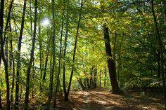 Das Prinzip der #Nachhaltigkeit hat seinen Ursprung in der Forstwirtschaft. Mehr erfahren in unserem #Blog: https://www.kaufhaus.com/blog/Nachhaltigkeit-Ein-Schlagwort-mit-300-jaehriger-Geschichte--51 (©az1172@flickr.com)