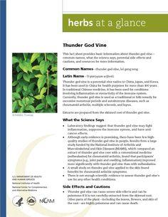 Thunder God Vine. Full document available at http://nccam.nih.gov/health/herbsataglance.htm