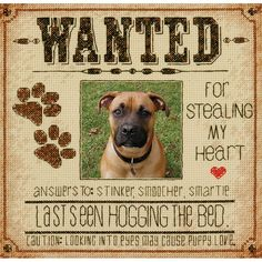 """Dog Wanted Counted Cross Stitch Kit-8""""X8"""" 14 Count"""