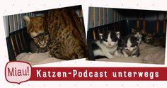 Unterwegs bei einer jungen Katzenfamilie, die das Glück hatte, bei Katzenpsychologin Sabine Schmidt ins Leben zu starten 😊🐱🐱❤ #Podcast #Katze