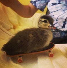 Jetzt brauche ich zu meinem See nicht mehr zu fahren... Nehme einfach mein Skate-board. EIN LOB AUF DIE TECHNIK