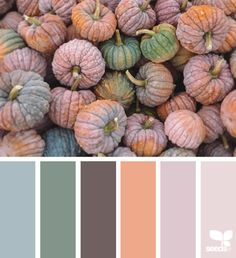Color Thanks - https://www.design-seeds.com/seasons/autumn/color-thanks-2