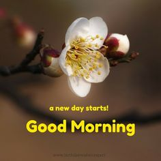 Good Morning. A new day starts! ...♥♥...