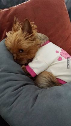 That classic Yorkie look! Melts your heart!