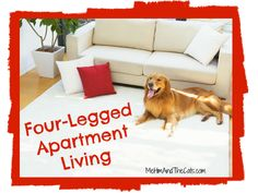 Apartments and pets can go together, with the right considerations. Cats and dogs are often very happy living with their family in an apartment. Cats, for the most part, are very content with apartment living. But dog lovers don't need to despair. Many dogs are suitable for apartments as well. Here are some things you might want to consider...
