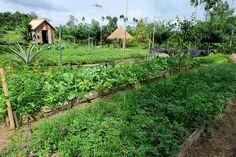 Baan rai i arun Forest Cottage, Bhumibol Adulyadej, Farm Stay, Organic Farming, Permaculture, Philosophy, Garden Ideas, Beautiful Places, Photographs