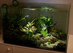 "ronbeckdesigns: ""Layout by Lupyo. The lighting is what makes this tank stand out… try getting creative with your lighting! """