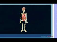 Human Body Videos for Kids - Primary Theme Park Human Body Lesson, Human Body Science, Human Body Unit, Human Body Systems, Kindergarten Science, Elementary Science, Science For Kids, Science Education, Physical Education