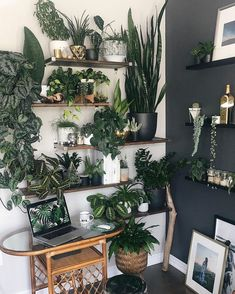 indoor benefits Find inspiration for adding some beautiful green to yo. Find inspiration for adding some beautiful green to your space, and reap the benefits of living with houseplants at the same time. Indoor Plant Wall, Plant Wall Decor, House Plants Decor, Indoor Plants, Bedroom With Plants, Living Room With Plants, Office With Plants, Indoor Living Wall, Plant Rooms
