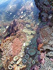 Best tide pools on Oregon Coast. Low tides are early morning and early evening. Be there an hour before lowest tide.