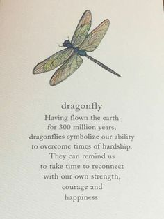 More reasons to love dragonflies.