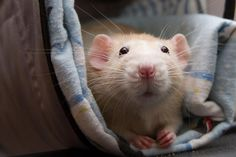 In May 2013, Marty was rescued from a pet shop where he lived alone in a plastic cage.