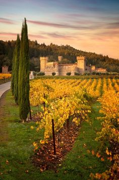 Castello di Amorosa is an medieval inspired Tuscan castle and winery in world famous Napa Valley. Explore our castle winery and enjoy a wine tasting. Cabernet Sauvignon, Lake Tahoe, Places To Travel, Places To See, Travel Destinations, San Diego, San Francisco, Napa Valley Wineries, Napa Vineyards